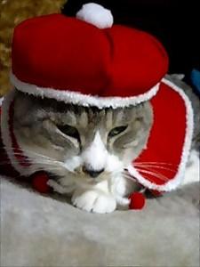 071127_ちび君クリスマス001.jpg