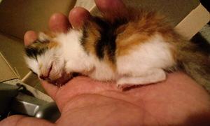 090507_ 昼頃赤ちゃん猫死亡 0001.jpg