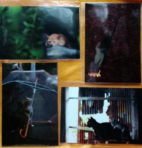 090517_東京猫語り_買ったポストカード.jpg