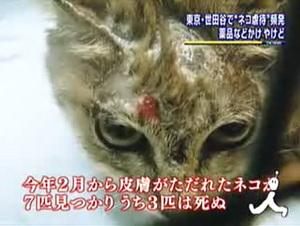 090519_TBS_News_i_世田谷_薬品による猫虐待.jpg
