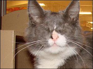 200903_アメリカ_オレゴン州_クーガーちゃん01(090303cougar_closeup).jpg