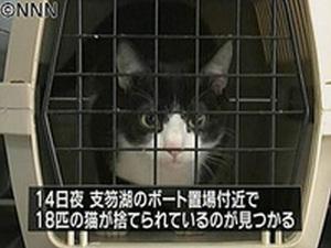 200904_北海道千歳_捨て猫18匹_NNN.jpg