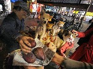 200904_福岡_犬猫500匹焼き芋で養う.jpg