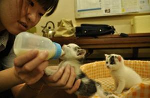 200905_福岡大牟田_冨士タクシー_子猫保護.jpg