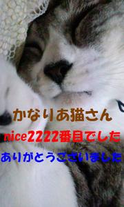2222niceThankYou.jpg