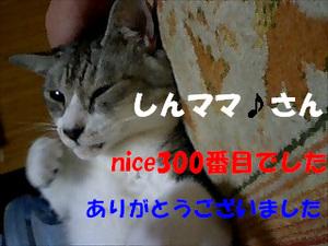 300niceThankYou.jpg