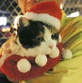 たま駅長_2008クリスマス_イルミネーション.jpg