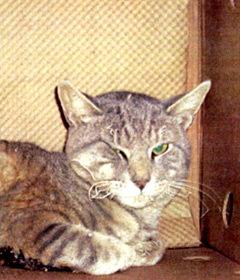 amd_scruffy_cat.jpg