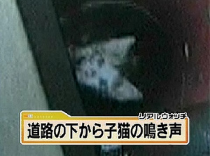 200907_徳島_汚水管に子猫6匹.jpg