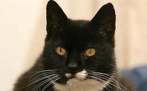 イギリス_27歳ミスチフ君(Oldest_cat_1125897c).jpg