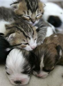 ヨルダン_子犬育てる猫さん06.jpg