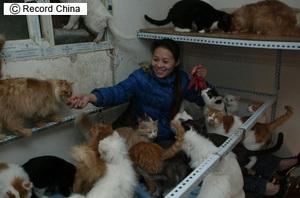 中国_北京_猫さん41匹引き取り手募集.jpg